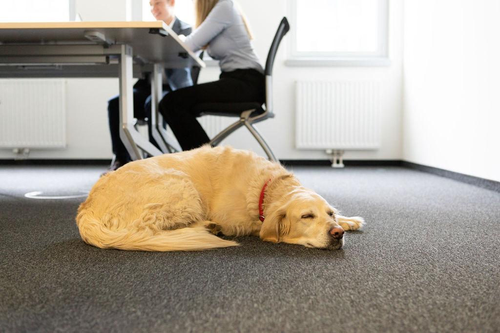 Officedog